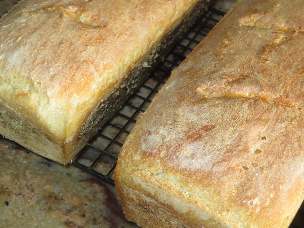 Nasz chleb codzienny.